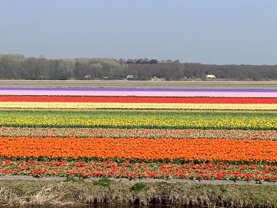 Tulip Fields of LIsse