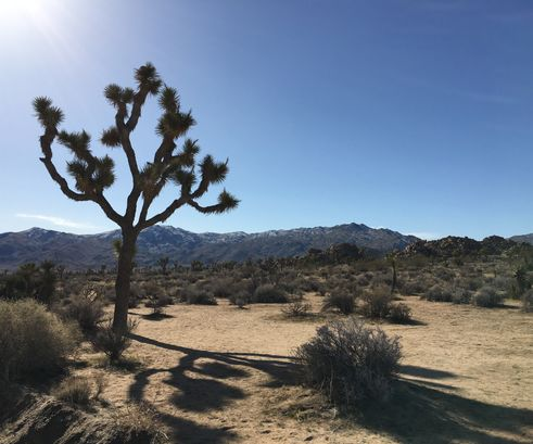 Joshua Tree National Park,CA